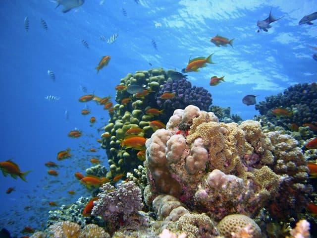 Snorkelen en duiken bij Sharm el Naga