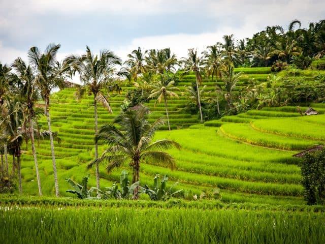 5 reden om Bali te bezoeken