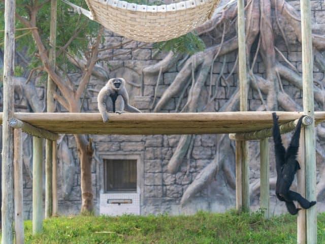 Review: Safaripark Beekse Bergen
