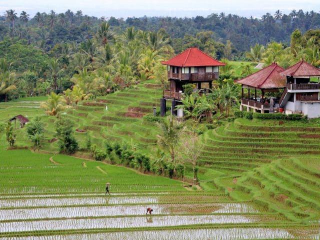 Wandelen op Bali
